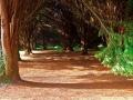 John F Kennedy Arboretum 2